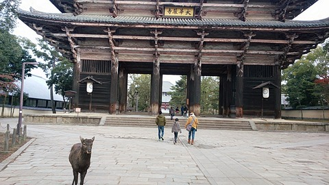 奈良・神戸旅行記その①浄瑠璃寺と岩船寺