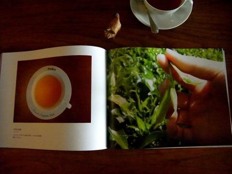 スリランカ紅茶研修旅行2013