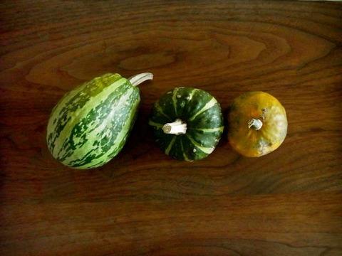 かぼちゃたち