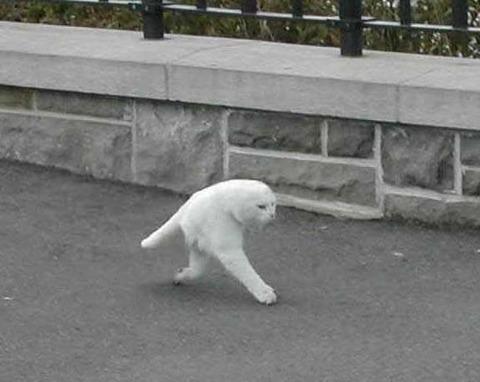 google-street-view-cat2