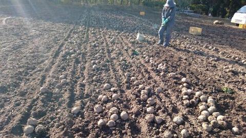 秩父のきゅうり、こんにゃく、トマト農家を視察2