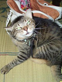 潤也: ママ、押入れに物を「片付ける」と「押し込める」は違うよ。