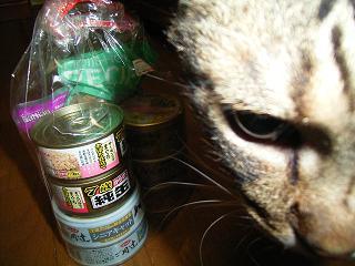 コレくれた人、実は「ネコ怖い」って言う人なんだけどね。