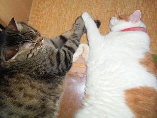 潤: ねえ、畳替えしようよ 母: 大家さんに言って