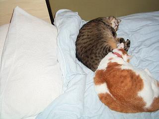 どうせなら枕を使ってくれれば、ネタになったのに