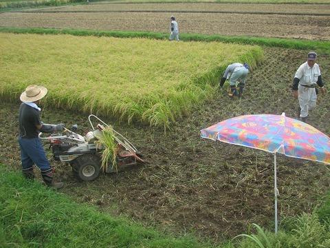 稲刈りs-IMG_0402