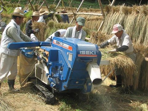 稲刈り17日s-IMG_0434