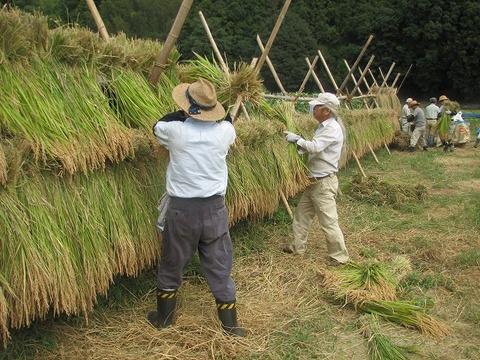 稲刈り17日s-IMG_0427
