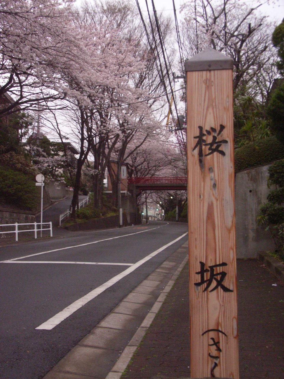 ここがあの『桜坂』
