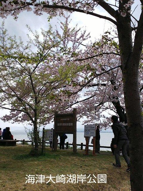 琵琶湖へ6