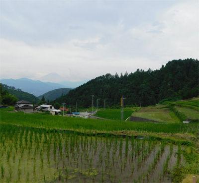 富士川町棚田
