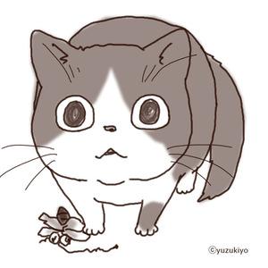 yuchokoko