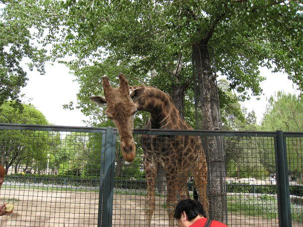 26 北京動物園 (22)