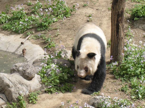 26 北京動物園 (11)