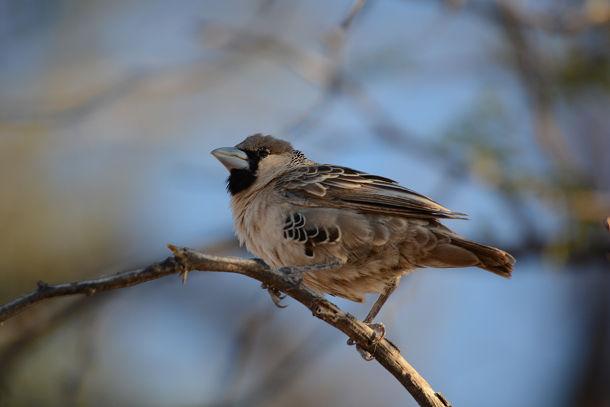鳥の巣 (4)s