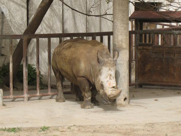 26 北京動物園 (19)