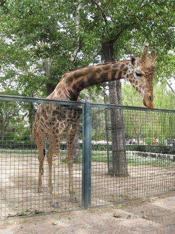 26 北京動物園 (24)