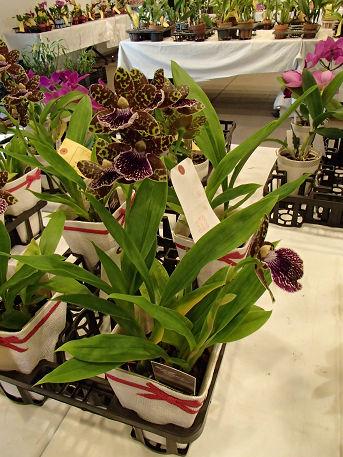 17 (11) 花の販売