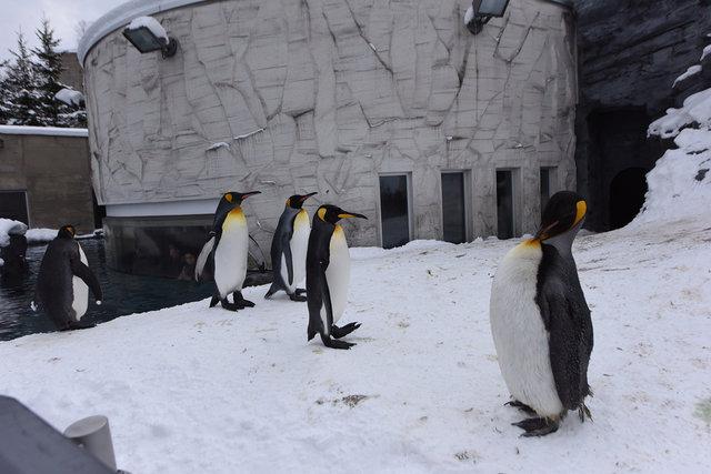 2日目ペンギン (7)s