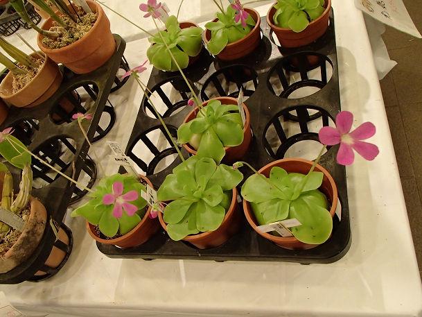 17 (15) 花の販売