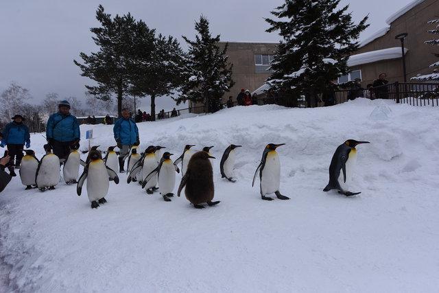 2日目ペンギン (3)s