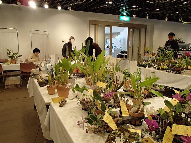 17 (13) 花の販売