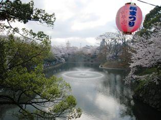 2010年 岡崎桜 017