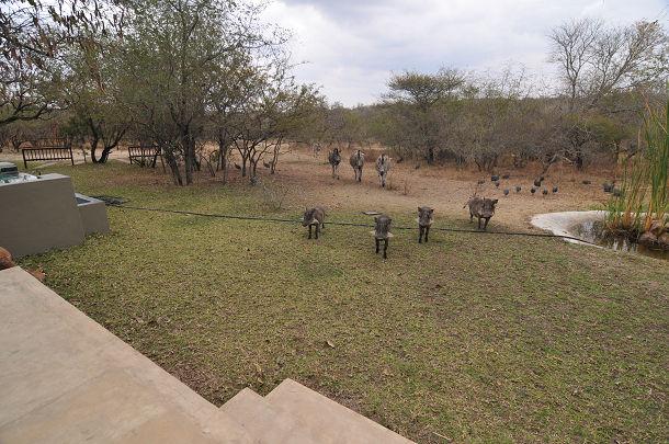 庭に来る動物たち (1)