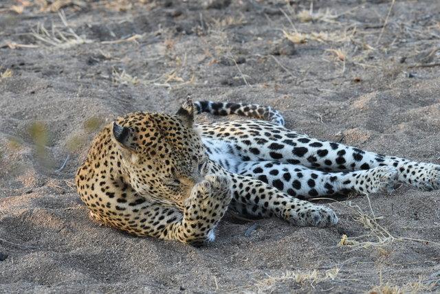 1豹 (40)