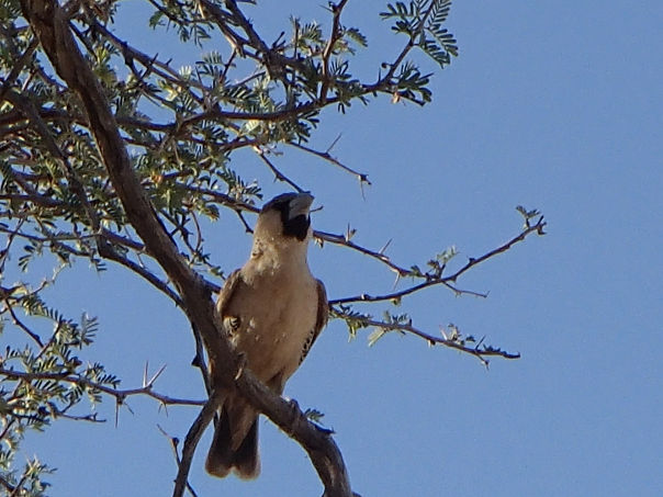 鳥の巣 (8)s