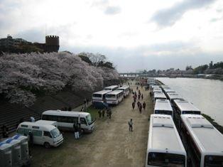 2010年 岡崎桜 012