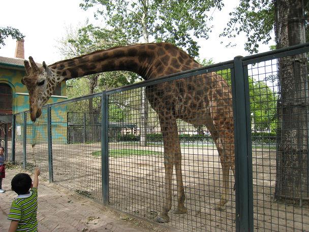 26 北京動物園 (27)