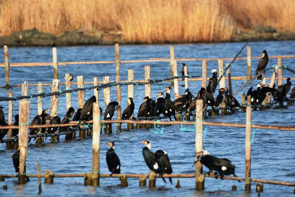 9正体不明の黒い鳥 (3)