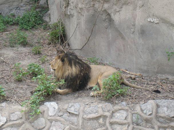 26 北京動物園 (15)