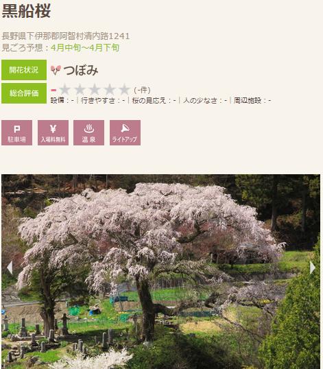 高遠 桜5 伊那