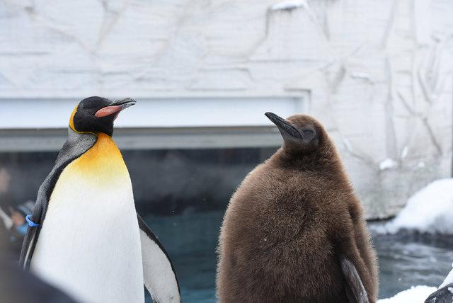 2日目ペンギン (26)s