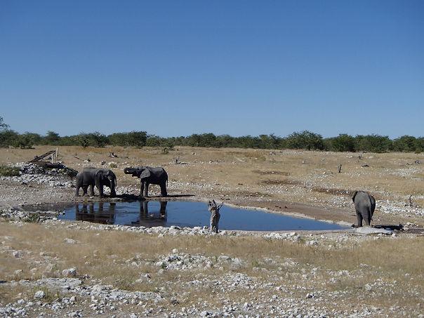 11象の群れ