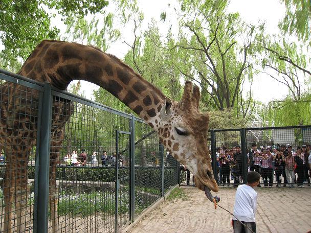 26 北京動物園 (25)