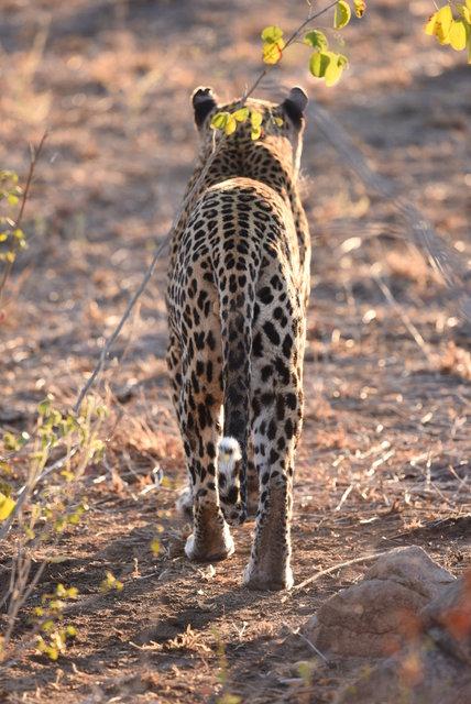 1豹 (19)