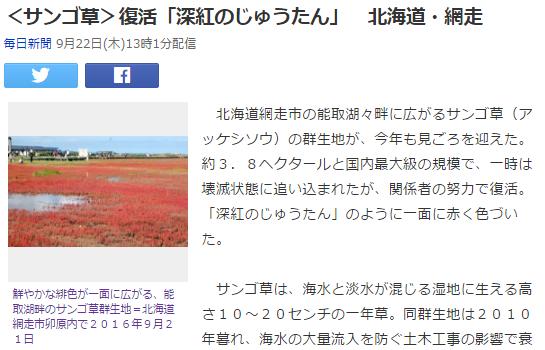 今日1 サンゴ草