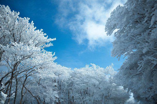 御在所 樹氷6
