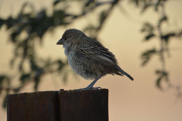 鳥の巣 (6)s