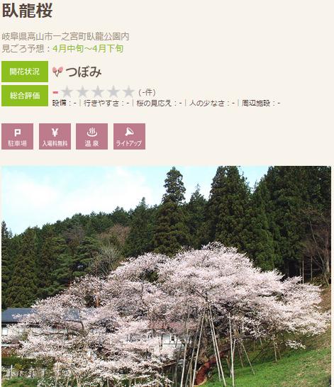 高遠 桜7 高山 臥龍の桜