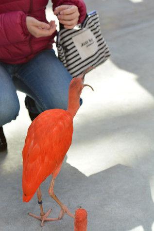 水辺赤い鳥 (5)