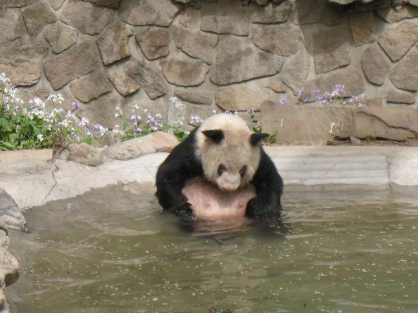 26 北京動物園 (5)