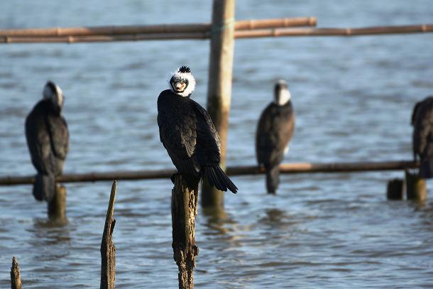 9正体不明の黒い鳥 (15)