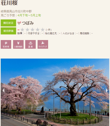 高遠 桜2 荘川桜