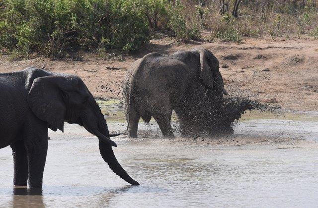 6象 (2)
