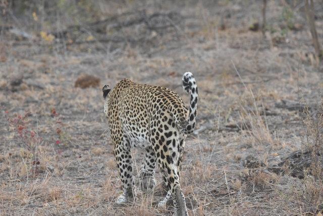 1豹 (28)