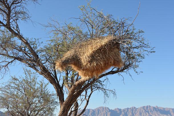 鳥の巣 (1)s